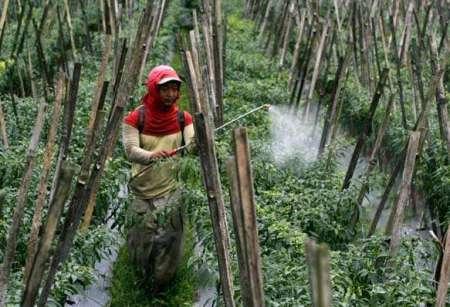 Penyemprotan Pestisida pada Sayuran dan Buah